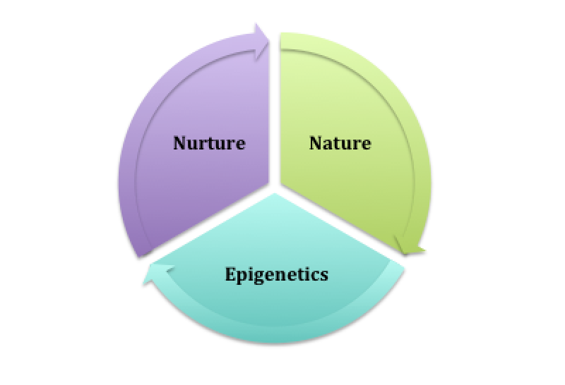 heredity versus environment essays The environment and their effects on the environment and their effects on development internal changes are a result of the environment influencing genetic.